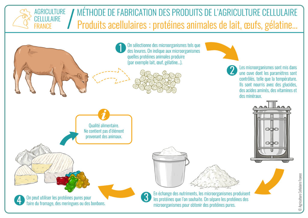 Processus agriculture acellulaire